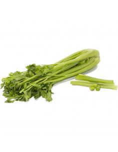 Celery Fresh bunch