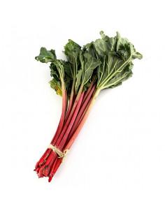 Rhubarb Fresh bunch